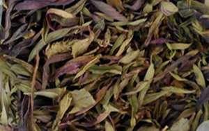 凤尾茶图片 凤尾茶的功效与作用